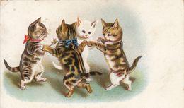 CHAT - CAT - KATZE  - ATTITUDE HUMANISEE - VOIR SCANS - Katzen