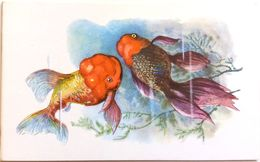 #863  Goldfish Lion's Head - Aquarium FISH, Animals - Postcard 1968 - Poissons Et Crustacés