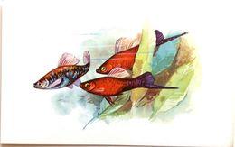#863  Heller - Aquarium FISH, Animals - Postcard 1968 - Poissons Et Crustacés