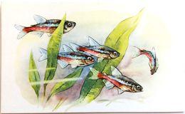 #863  Neon Tetra - Aquarium FISH, Animals - Postcard 1968 - Poissons Et Crustacés