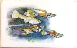 #864  Guppy Endler - Aquarium FISH, Animals - Postcard 1968 - Poissons Et Crustacés