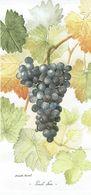 """RAISIN """"Pinot Noir"""" - Magnifique Carte D'une Aquarelle De Jeannette Buvat (Creuse) - Flores, Plantas & Arboles"""
