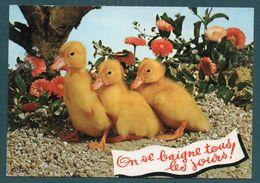"""""""Animaux Humoristiques"""" - Trois Petits Canards - Non Classés"""