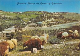 JERUSALEM - Palestine