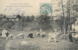 CPA 85 Vendée Moutons Au Paturage à Mortagne - Les Bordes De La Sèvre - Mortagne Sur Sevre