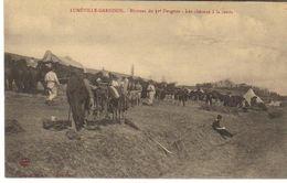 LUNEVILLE) - LUNEVILLE GARNISON - Bivouac Du 31è Dragons- Chevaux à La Corde - Luneville