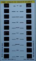 LESTRADE :  9022   ANIMAUX DE CIRQUE ET DE ZOO  2 - Visores Estereoscópicos