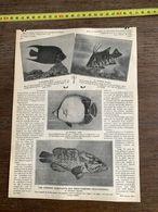 1910 JDV POISSONS CURIEUX HABITANTS DES PROFONDEURS OCEANIENNES POISSON NEGRE LUNE DIABLE ANGE - Sammlungen