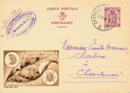 Publibel 812 – 1948 - Le Doryphore Menace Vos Récoltes – Détruisez-le - Werbepostkarten