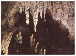 (C 26) New Zealand - Waitomo Caves - Nouvelle-Zélande