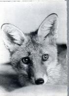 CPSM FRANCE (PAS DE DATE) - LE RENARD ! - Animales