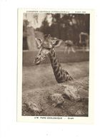 CPSM Girafe Exposition Coloniale 1931 Parc Zoo TB 2 Scans - Exhibitions