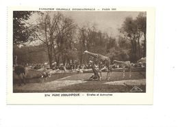 CPSM Girafes & Autruches Exposition Coloniale 1931 Parc Zoo TB 2 Scans - Exhibitions