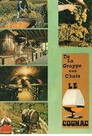 Vins Vignes Vendanges Multi-vues Animée De La Grappe Aux Chaix Le Cognac En Charente Caves Raisin Cuves - Vignes