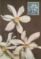 Carte  Maximum  1er  Jour   ANDORRE   Narcisses   Des   Poétes   1966 - Andorra Española