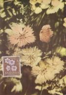 Carte  Maximum  1er  Jour   ANDORRE   Oeillets  Sylvestres   1966 - Andorra Española
