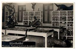 Old SIAM Bangkok Museum Pasteur Institute PHOTO Postcard Cpa Thailande Thai Taxidermy Taxidermie Animals Tiger - Thailand