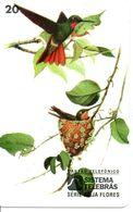 Animal Oiseau Vogel  Télécarte Brésil Phonecard Telefonkarte (G 265) - Uccelli