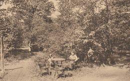 Montigny Le Tilleul  ,  Eden Park  ,  Une Clairière Dans Le Sous Bois  ,altitude 180 M - Montigny-le-Tilleul