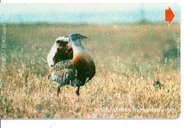 Animal Oiseau Bird Vogel Télécarte Turc Türk Phonecard Telefonkarte (G 266) - Galline & Gallinaceo