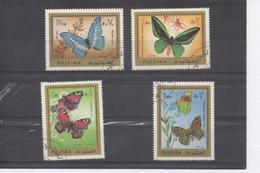FUJEIRA  (Arabie Du Sud Est) - Faune - Insectes - Papillons - Lépidoptères - - Farfalle