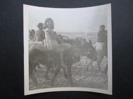 PHOTO BELGIQUE (M2003) LA CÔTE (2 Vues) Balade Sur Les ânes - Lugares