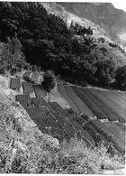 Photo Guatemala Horticulture En Terrasses Dans Le Village De San Antonio Palopo Ph. Vivant Univers 2000 . - Lugares
