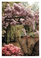 27 - Giverny - La Maison Et Le Jardin De Claude Monet - Le Jardin D'eau - La Glycine Mauve Du Temps De Claude Monet - Fl - France