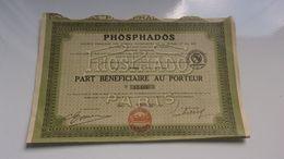 PHOSPHADOS Engrais Phosphates De La Riviéra (1923) - Actions & Titres