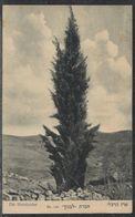 """Die Herzlzeder - Herzl Zeder Israel Palestine Postcard Publisher """"Lebanon"""" No. 108 - Giudaismo"""