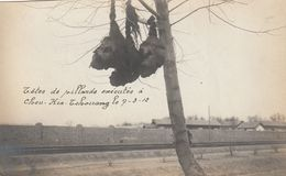 Decapitation - Têtes De Pillards Exécutés à Cheu-Kia-Tchouang (SHIJIAZHUAN) 1912 - Photo - Chine