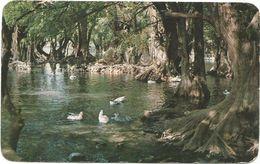 XW 3135 Mexico - Lago De Camecuaro - Tangancicuaro / Non Viaggiata - Mexique