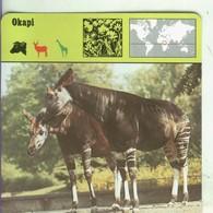Postal: Ficha Sape Coleccionable: Okapi - Cartoline