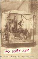 00404 TERVUREN // MUSEE DU CONGO // LE GROUPE DES GORILLES // NON VOYAGEE - Musei
