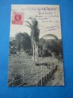SEYCHELLES  RAFFIA  TREE MAHE  VOYAGEE 1913  TIMBREE - Seychelles
