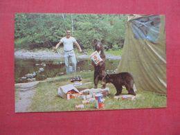Bear  Now Who's After Whose Porridge?     Ref 4218 - Bären