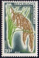 MADAGASCAR - RICE  - **MNH - 1960 - Landwirtschaft