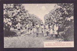 CPA Cameroun Afrique Noire Métier Cacao Non Circulé - Camerún
