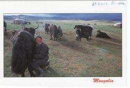 CPM MONGOLIE La Traite Des Yacks (avec Timbres) - Mongolei