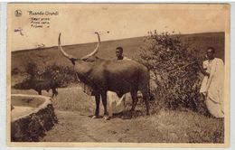 RUANDA-URUNDI - Bétail Primé - Prijsvee - Prime Cattle - Ruanda Urundi
