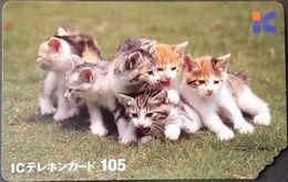 Telefonkarte Japan - Katzen , Cats - IC Card - Dogs