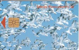 FINLAND - Birds, Sonera Telecard, Tirage 60000, 07/00, Used - Finlande