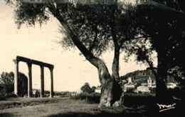 04  - CPSM - RIEZ - Vestiges Romains - Otros Municipios