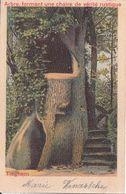 Tieghem - Arbre, Formant Une Chaire De Vérité Rustique - Anzegem