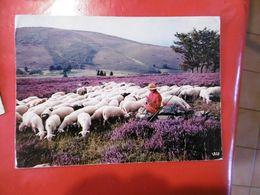 à Identifier - Les Monedières - Le Limousin Pittoresque - Format: 210mm Sur 150mm - Cartoline