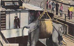 1922, Rangoon, Shipping Elephants, Olifant Gaat In Boot, 1910 - Myanmar (Burma)
