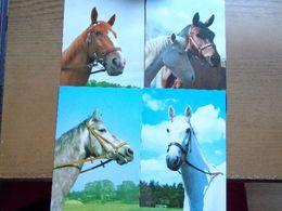 Paard, Cheval, Horse / 4 Kaarten (onbeschreven) - Horses