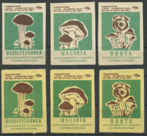 RUSSIA USSR 1969 Matchbox Labels 6v - Mushrooms - Boites D'allumettes - Etiquettes