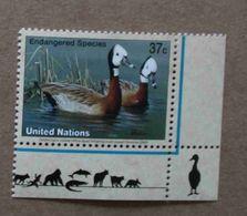 NY03-01 : Nations-Unies (New-York) / Protection De La Nature - Dendrocygne Veuf (Dendrocygne - Unused Stamps