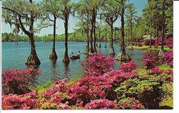 Wilmington.  Greenfield Gardens. North Carolina.  S-4516 - Wilmington